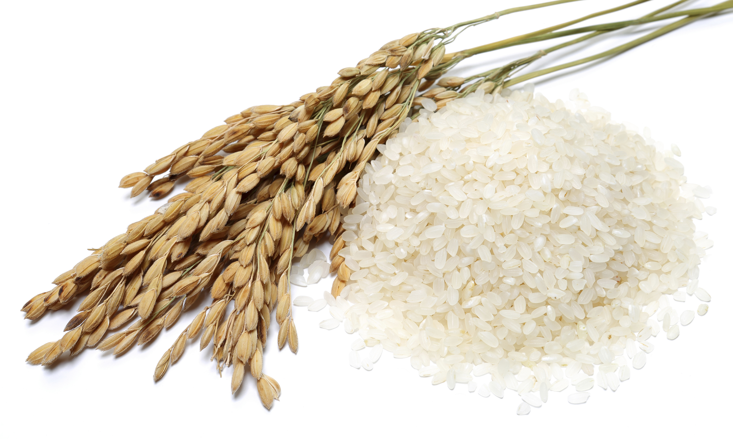 rice, rice straw and paddy on a white background